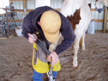 Farrier Information Be Quick Horseshoeing Inc Farrier