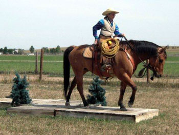 Horse Training Clinics And Lessons Be Line Equestrian